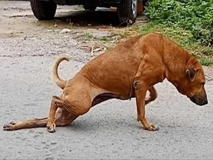 clever dog-leg broken